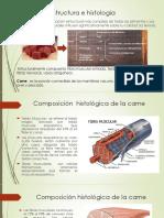 Ultraestructura e Histología de La Carne