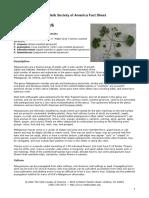 pelargoniums_fact.pdf