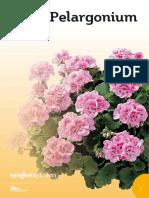 Pelargonium CATALOG.pdf
