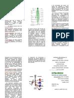 tripticosistemanervioso-120915170434-phpapp02