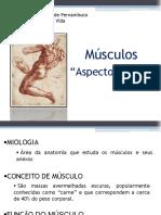 Estudo Geral Dos Músculos Luanna