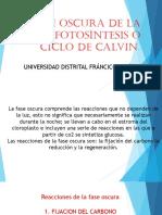 FASE_OSCURA_DE_LA_FOTOSINTESIS_o_ciclo_d.pptx