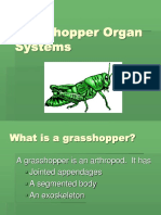 Lesson 11 - Grasshopper ppt.ppt