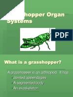 Lesson 11 - Grasshopper ppt.ppt