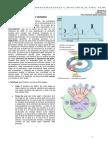 5-Division Celular y Meiosis
