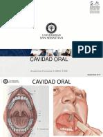 Cavidad Oral Dbio 1056 201720