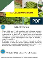 07 El Cultivo de Habas. Expo