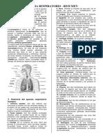 Sistema Respiratorio humano basico