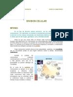 1° DIVISION CELULAR Y GAMETOGENESIS.pdf