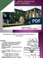 taierile_la_v.de_vie.pptx