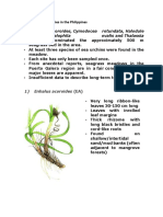Common Seagrass Species in the Philippines