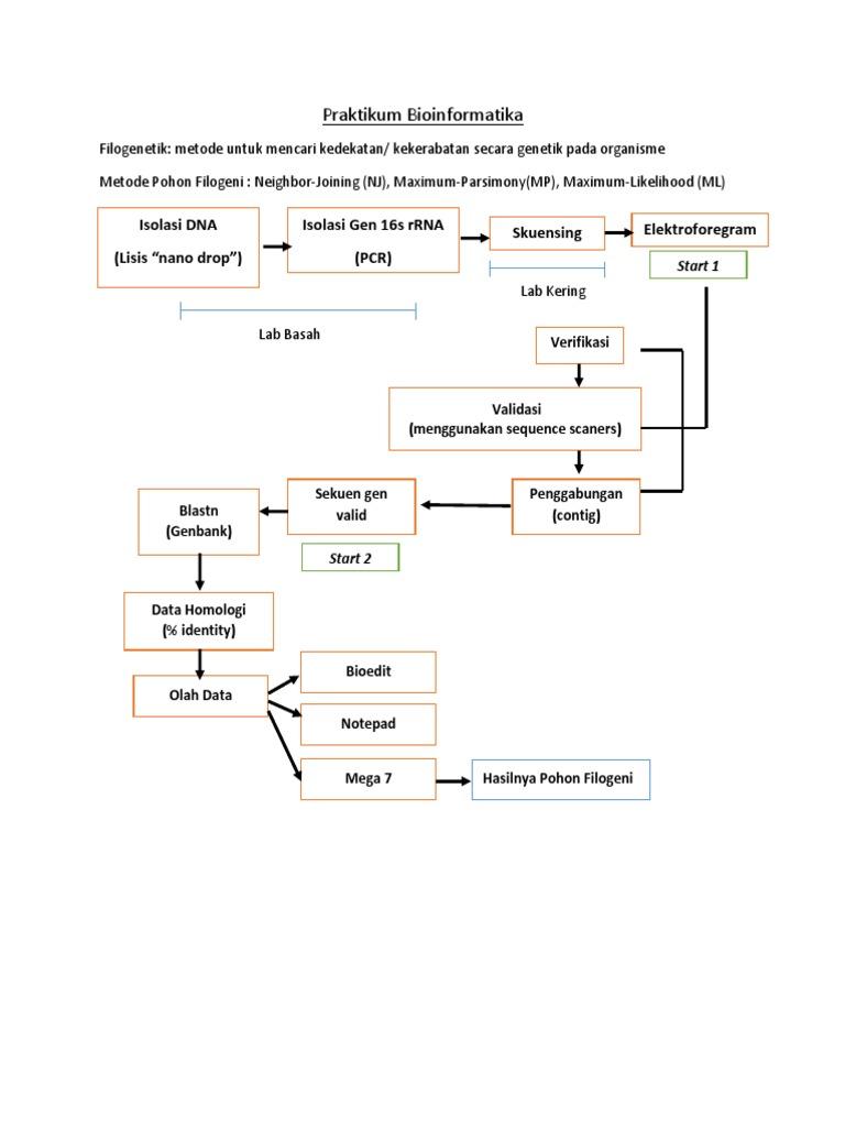 Dessy praktikum bioinformatika ccuart Choice Image