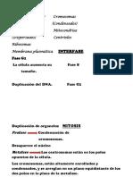 Envoltura Nuclear Cromosomas