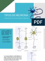 Tipos de Neuronas (1)