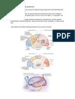 Circulación Vascular Cerebral - Nociones Básicas de Anatomía