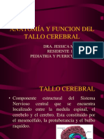 Anatomía Interna Del Tallo Cerebral