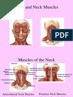 6.24 Muscles Head & Neck  - Blok 6