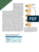Estructura y Fisiología Del Prion