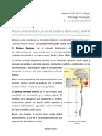 Neuroanatomía Gruesa Del SN Central y Periferico