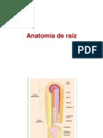AnatomiaderaiztalloyhojaBdV
