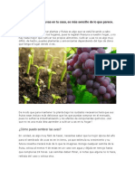 Aprende a Cultivar Uvas en Tu Casa