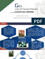 Intoxicación Por Plantas Listo