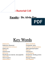 TheBacterialCell.ppt