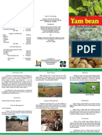 Yam Bean Production