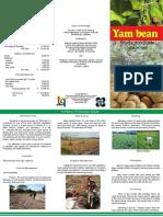 Yam Bean Production