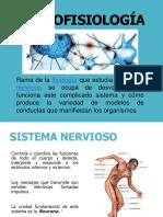 Neurofisiologia 1