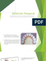 Denticon Permanente y Temporal