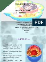 celulti.pdf