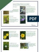 20 common urban plants in ireland
