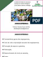 3º Ano - Angiospermas