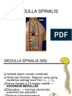 II. Medulla Spinalis