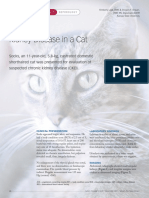 Kidney Disease Cat