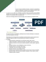 La Mineralogía (CODELCO).pdf