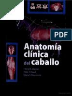 Anatomia Clinica Del Caballo - Hilary M Clayton (SPG) - 1