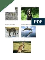 Gambar Fauna Dan Flora
