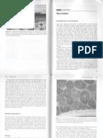 macroalgae.pdf