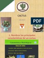 Especialidad Cactus