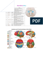 Neuro Notes.docx
