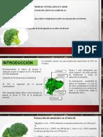 Expo Brócoli