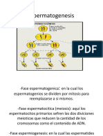 Espermatogenesis yassiel (1)