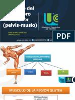 Musculos Inferiores Pelvis- Muslo