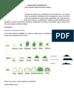Practica 2_Microbiologia_Cultivo Secundario y Tinciones