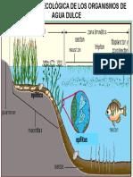 Clasificacion Ecologica de Los Organismos de Agua Dulce