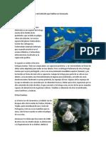 Algunas Especies en Peligro de Extinción Que Habitan en Venezuela