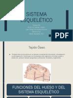 Sistema Esquelético2