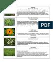Catalogo infusões.pdf